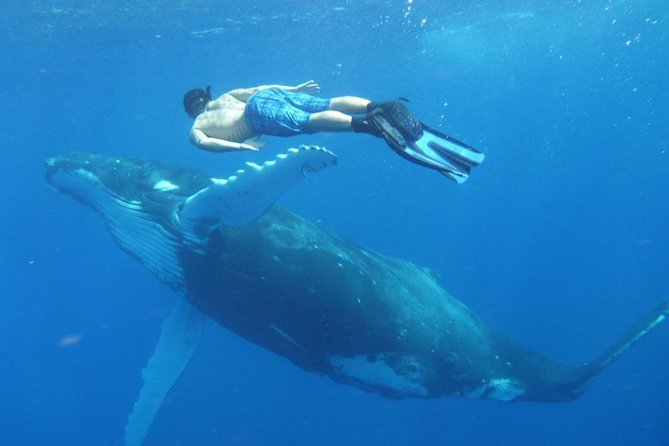 4-Day Tour of Tongatapu Island with Whale Swim in the Wild