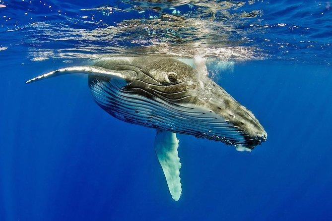 Ultimate 3 day Tongatapu with Whale Swim