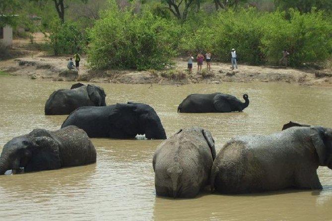 Wildlife view during Safari