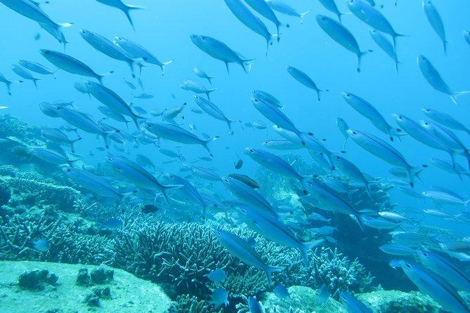 Pure beauty of sea life
