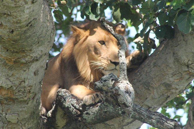15-Day Gorilla and chimps Trekking, Big 5 and Nature Sighting Safari