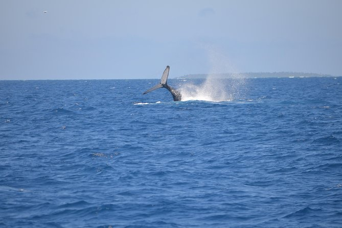 4 day VIP Combo Tour with Whale Swim - with private day trip!