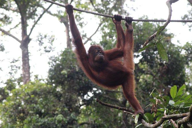 Sandakan Borneo Wildlife Day Trip Tour