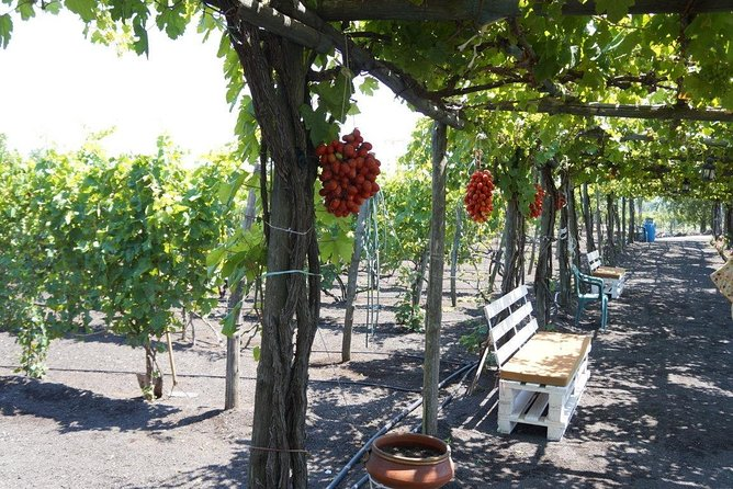 Private Pompeii and Local Wine Tasting from Naples ALL INCLUSIVE photo 9