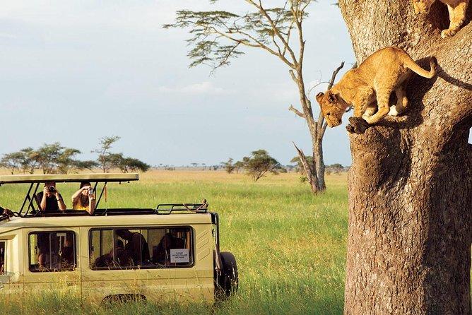 3 Days-Tarangire, Ngorongoro & Lake Manyara: Camping Joint Safari.