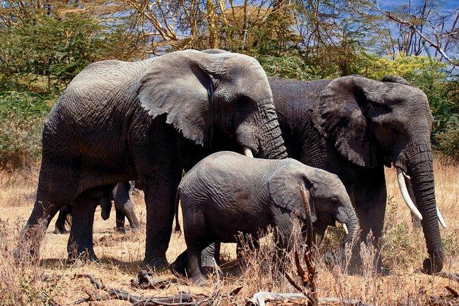 4 Days Tanzania Safari Manyara, Serengeti & Ngorongoro With Burigi Chato Safaris