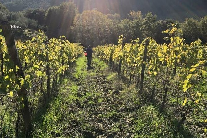 Wine & EVO Oil Tasting with Lunch or Dinner in the Vineyard