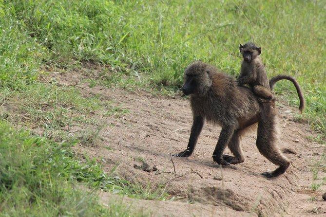 4 Day Gorilla Trekking & Golden Monkeys