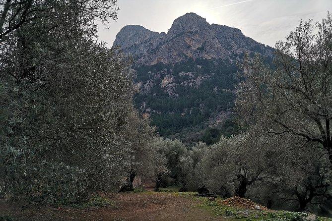 Olive Oil Culture + Tasting