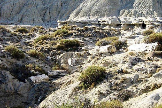 La Leona Petrified Forest from El Calafate