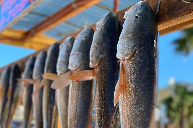 Private 4-Hour Shallow Draft Bay Fishing from South Padre Island