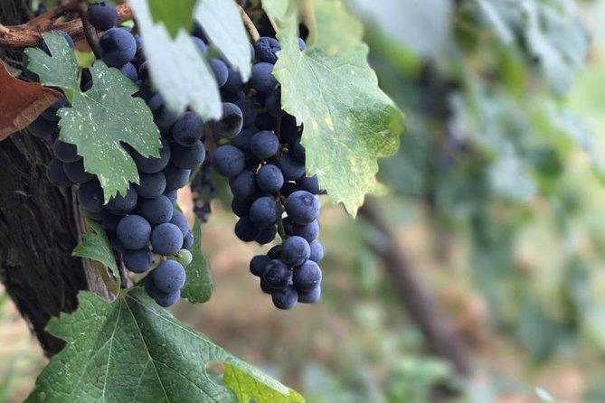 Grand Wine Tasting & Food Tour Of Berat(Çobo & Alpeta winery)By Berat City Tours
