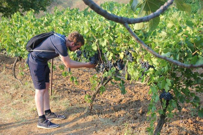 Grand Wine Tasting & Food Tour of Berat