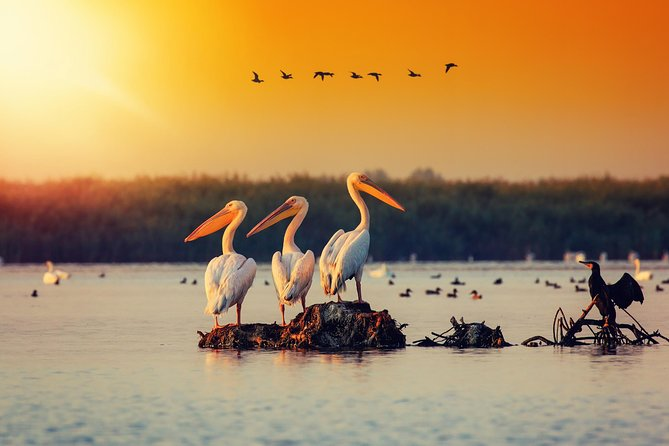 Bird watching in Danube Delta - Private day tour from Bucharest