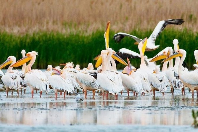 Discover Danube Delta from Bucharest - Private Tour for 5 Days photo 11