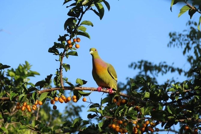 Kalametiya Bird Watching,Lagoon Safari trip From any Hotels Southern Province