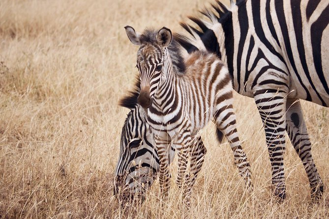 4 Days Tanzania Safari Manyara, Serengeti & Ngorongoro With Burigi Chato Safaris