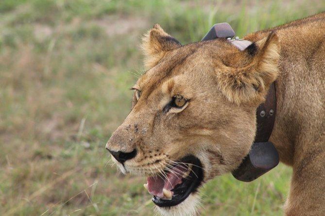 7-Day Wildlife Adventure Safari