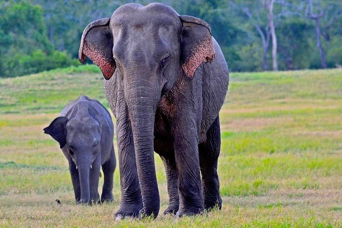 Udawalawe National Park | 3 hour Safari Tour | Elephants Transit Home
