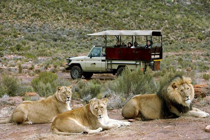 Cape Town - The Best of Aquila Safari Tour