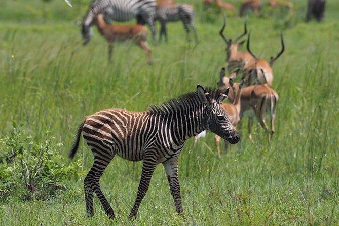 3 Days Unique safari Selous Game Reserve Tanzania