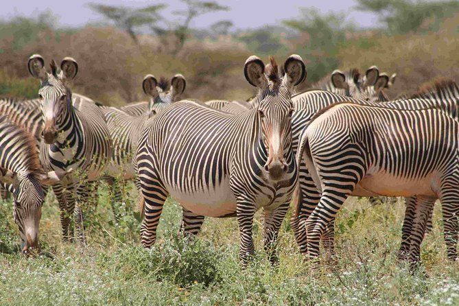 View the Big 5, Special 5 and other wildlife in this 8 Days Classic Kenya Safari photo 7