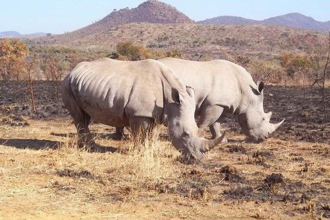 Pilanesberg Day Tour
