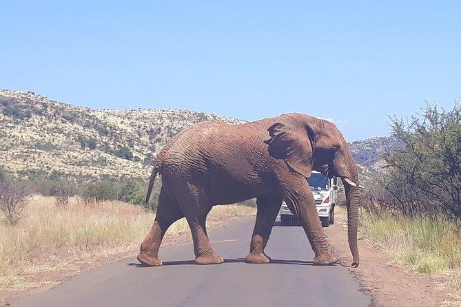 Pilanesberg and Sun City Tour