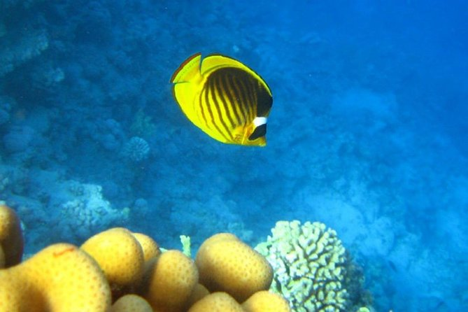 Snorkeling trip in Ras Mohamed by bus