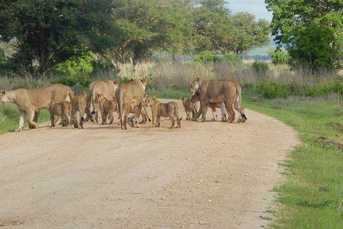 5 Days safari Selous GR and Mikumi NP