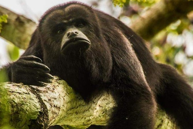 Private Belize Cave Tubing & Howler Monkey Sanctuary Combo Tour with Lunch