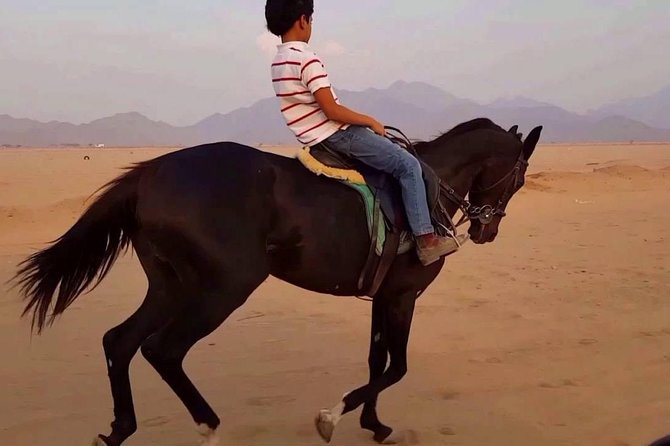 Two hours Horse Riding At Amazing Desert - Sharm ElSheikh photo 6