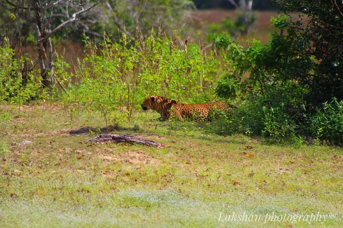 Safari at Wilpattu National Park from Negombo (All inclusive day tour) photo 25