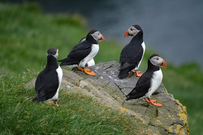 Mykines | The Puffin Paradise