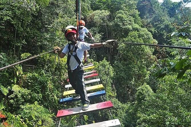 Extreme sports - macadamia forest adventure