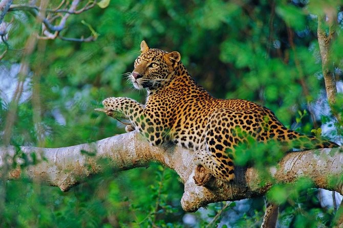 All inclusive Safari Tour from Udawalawa National Park