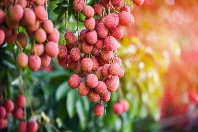 Exotic fruits exploration