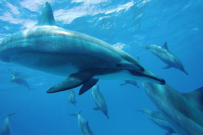 Swim With Dolphin in Satayeh Reef Snorkeling Sea Trip - Marsa Alam