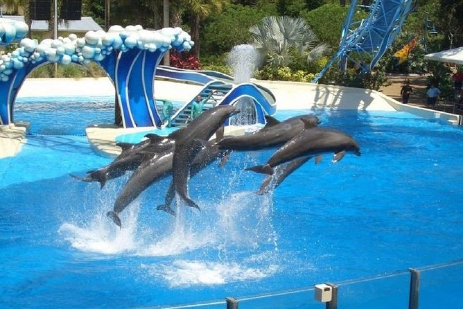 hurghada swimming with dolphins snorkeling tour lunch