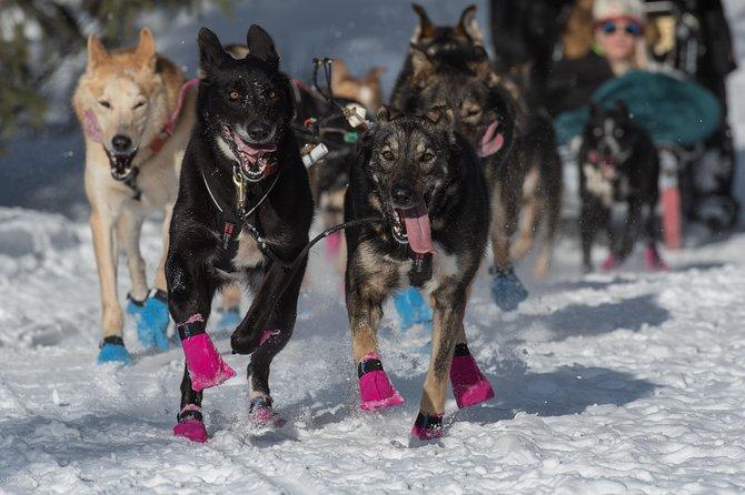 Anchorage Dog Sledding Day Tour