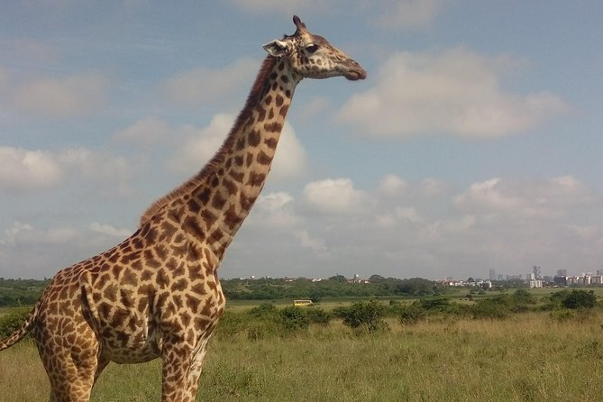Tour Nairobi; Nairobi national Park/Elephant &Giraffe Sanctuaries/Bomas of Kenya
