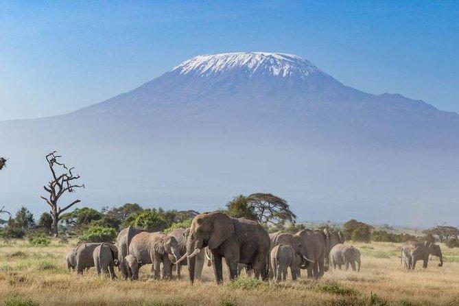 Kenya Safari: 1 Night/2 Days Amboseli National Park Tour