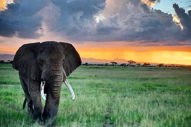 Kenya Group Tours: 2 Days Aboseli National Park Shared Trip from Nairobi