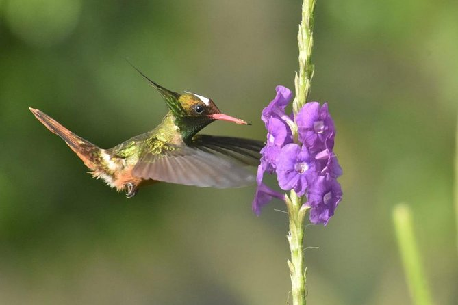 Birding in the Rainforest