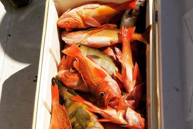 Half-Day Local Sport Fishing Trip from San Diego