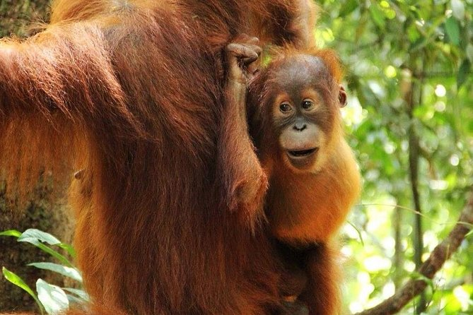 Overnight Orangutan Trek in Bukit Lawang photo 1