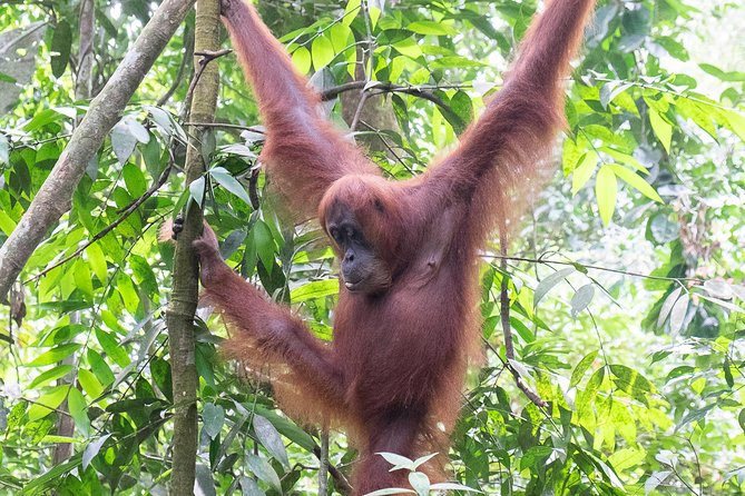 Overnight Orangutan Trek in Bukit Lawang photo 9