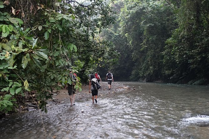 Overnight Orangutan Trek in Bukit Lawang photo 2
