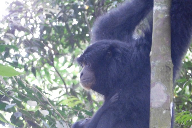 Overnight Orangutan Trek in Bukit Lawang photo 6
