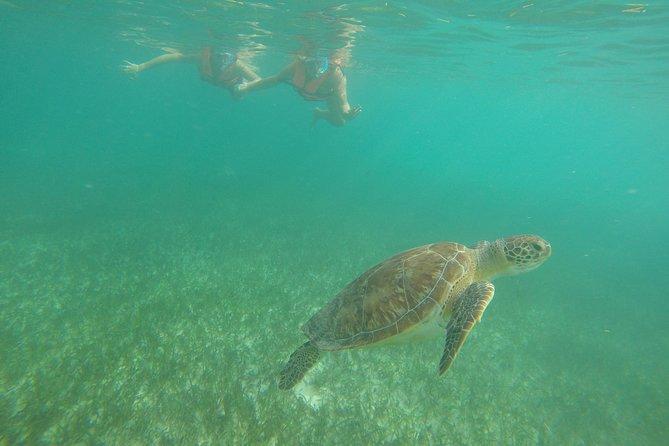Akumal Marine Turtle Daily Tour